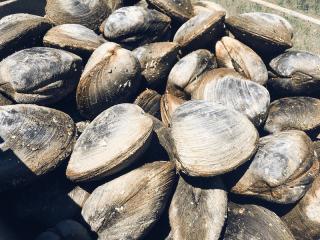 Shellfishing